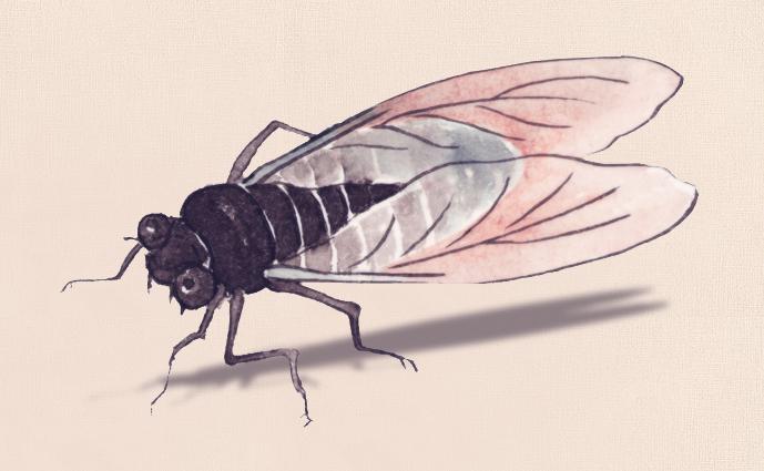 蝉和柳树国画