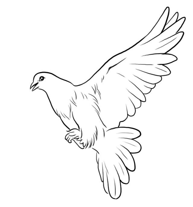 鸽子手绘简易图